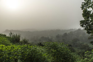 jungle-5948